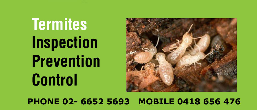 Coffs Harbour termites control